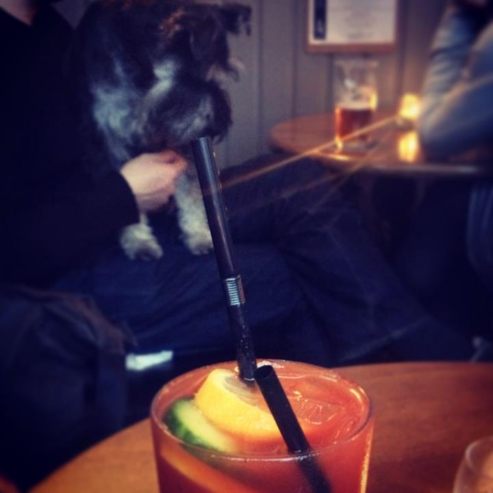 ... and then a giant dog came along and had a sip of my Bloody Mary!